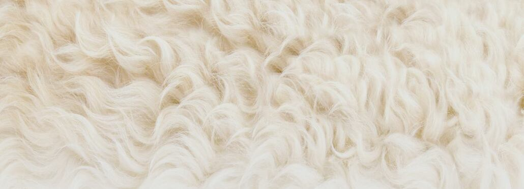 Function of sheep wool